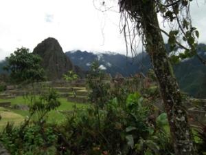 Machu Picchu Garden