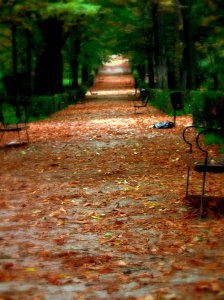 Leafy park path in autumn