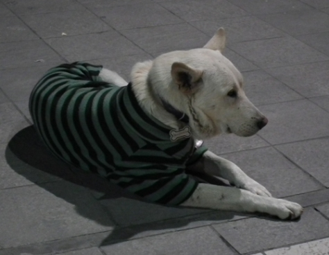 Dog in a knitted jumper