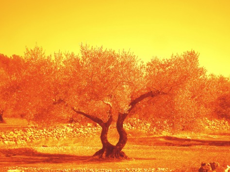 Tree in flaming orange/yellow tint