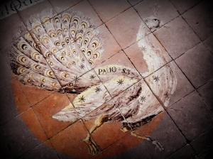 peacock pauos3